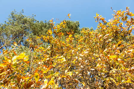 Autumn in a mixed, deciduous and coniferous forest
