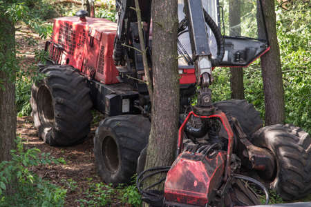 forestry harvester during a job among trees in the forest