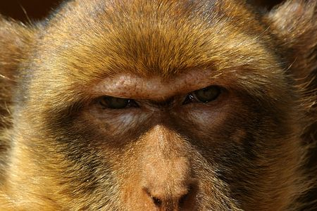 shiver: detail of the glance a monkey