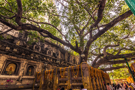 부처님 께서 인도 부다 가야에있는 너바나에 도착한 보리수 나무 스톡 콘텐츠