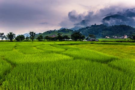 pokhara: Fields of Pokhara, Nepal Stock Photo