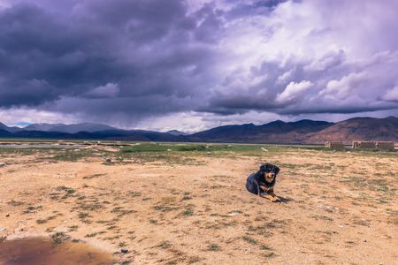 misterious: August 15, 2014 - Dog in the countryside of Tibet