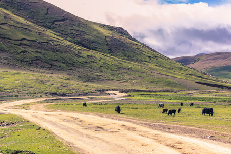 misterious: August 16, 2014 - Yaks in the countryside of Tibet
