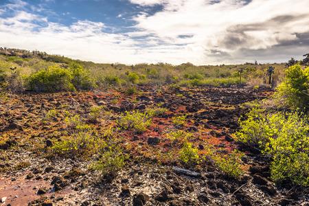 Galapagos Islands - August 23, 2017: Landscape near Las Grietas in Santa Cruz Island, Galapagos Islands, Ecuador