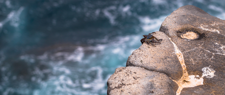 sur: Galapagos Islands - August 24, 2017: Crab at the coast of Plaza Sur island, Galapagos Islands, Ecuador