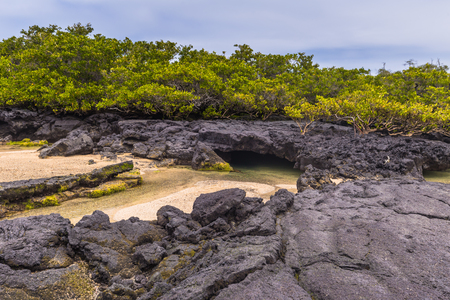Galapagos Islands - August 26, 2017: Landscape of the Lava tunnels of Isabela Island, Galapagos Islands, Ecuador Editorial