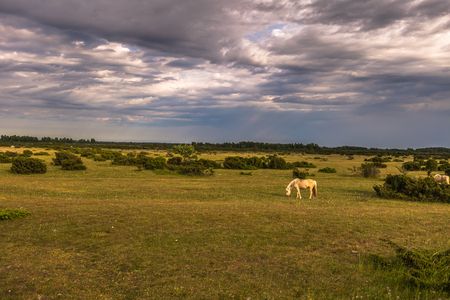 Horses in the Farmland of Öland, Sweden