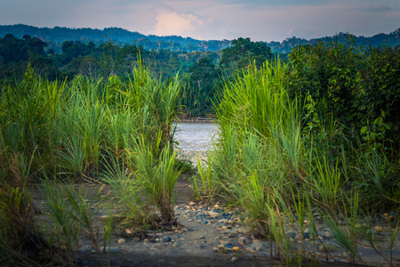 early summer: Landscape of the Amazon rainforest of Manu National Park, Peru