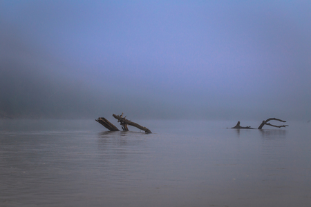 Dead branches among the fog in the Madre dde Dios river in Manu National Park, Peru