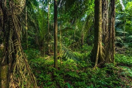tropica: Manu National Park, Peru - August 07, 2017: Manu National Park, Peru Editorial