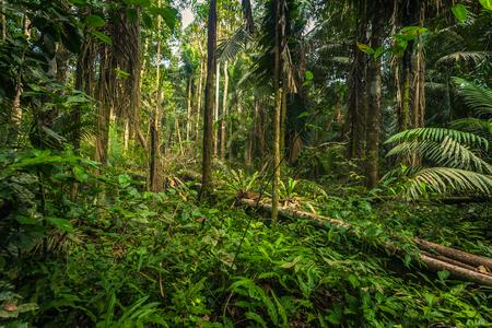 マヌー国立公園, ペルー - 2017 年 8 月 7 日: マヌー国立公園、ペルーのアマゾンの熱帯雨林