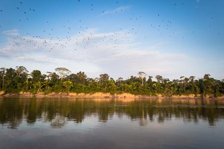 Landscape of the Amazon rainforest of Manu National Park, Peru