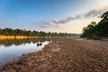 Manu National Park, Peru - August 09, 2017: Landscape of the Amazon rainforest of Manu National Park, Peru