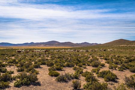 Wild landscape of Eduardo Avaroa National Park, Bolivia
