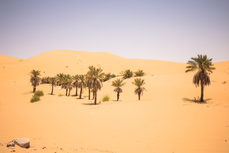Palm trees in the outskirts of Taghit, Algeria