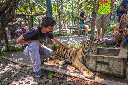 Mae RIm - October 18, 2014: Tigers in the Tiger Kingdom sanctuary in Mae Rim, Thailand