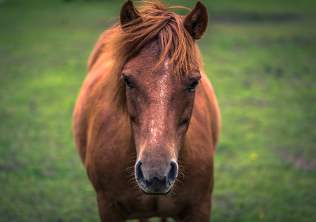 Closeup of a horse on a farm in the Swedish Archipelago, Sweden Stock Photo