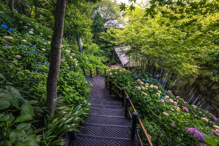 The gardens of Hasedera temple in Kamakura, Japan