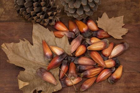 brazilian pine fruit pinion on wooden background