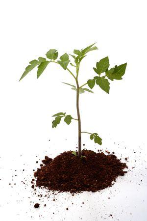 Bbay plant-New life