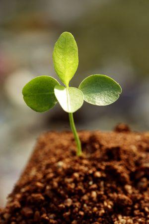 Les petites plantes Nouvelle vie Banque d'images