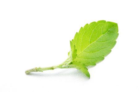 veda: Basil leaf