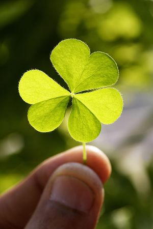 four leaved: Holding clover leaf