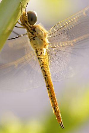 Dragon fly Фото со стока