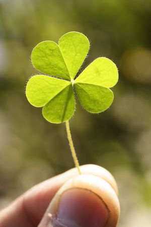 Holding a clover leaf Stock Photo - 2494950