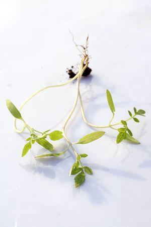 Small plants-New life Фото со стока