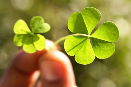 Holding a three leaf clover Stock Photo