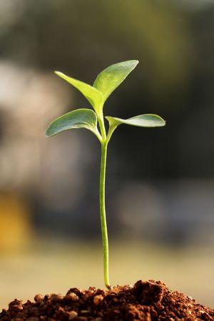 Small plant-New life