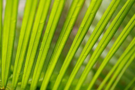 Close up palm fronds photo