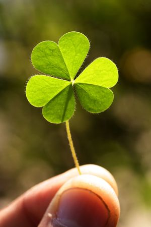 three month: Holding a clover leaf Stock Photo