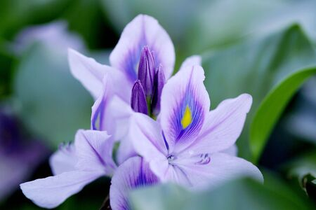 Close up of a purple flower in a pond Stock Photo - 3260897