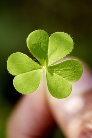 Holding three leaf clover
