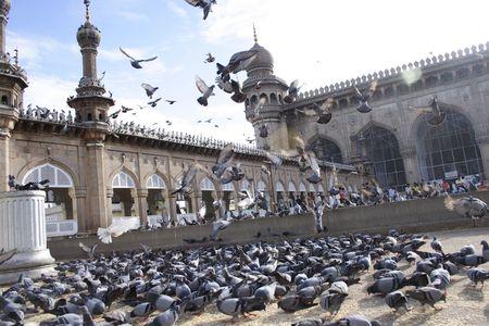 Pigeons at mecca masjid,Hyderabad,India Stock Photo