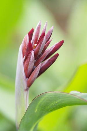 graden: Flower bud in a graden
