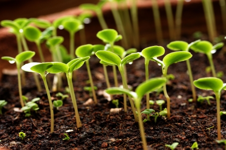 saplings: growing plants-New life Stock Photo
