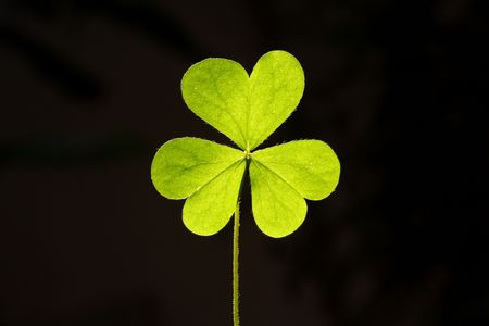three leafed: Three leaf clover
