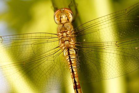 Dragonfly Фото со стока - 88609929