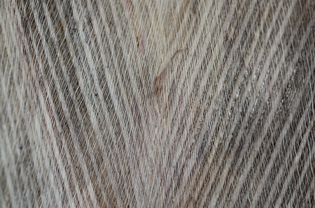 foglia: fibra di cocco Stock Photo