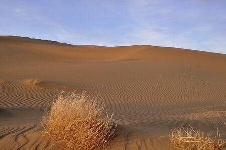 Sand dune with sage brush Imagens