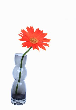 gerbera flower in vase Stock Photo - 11000019