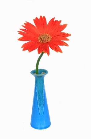 gerbera flower in vase Stock Photo - 11000025