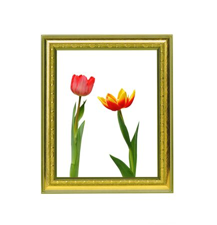 Two beautiful tulips in vintage frame photo