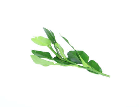 Lime leaves on white background photo