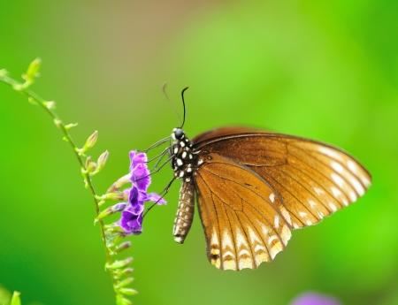 まさしく最大の蝶 写真素材