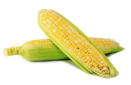トウモロコシの白い背景で隔離の耳
