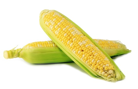 Ear of Corn isolated on a white background